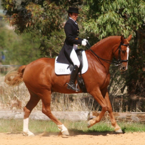 Dressage DVD's by Linda O'Leary
